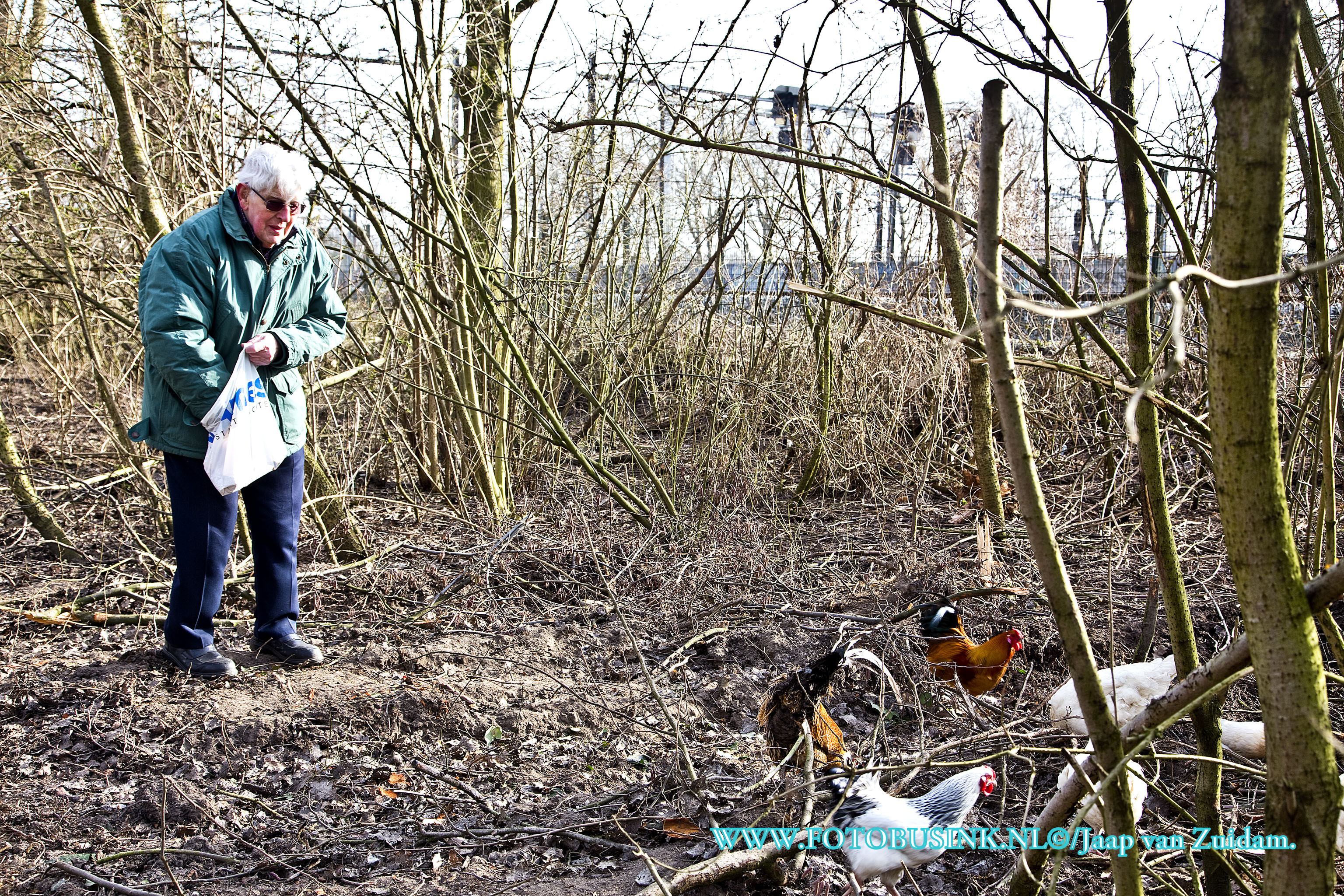 85 jarige uit Zwijndrecht voert al meer dan 25 jaar 'zijn' kippen.