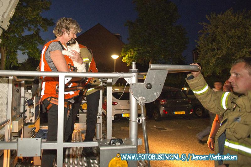 Brandweer opgeroepen aan de Pijl in Dordrecht voor Rocky in de boom.