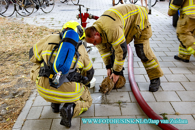 Brandweer haalt kat uit woning na woningbrand