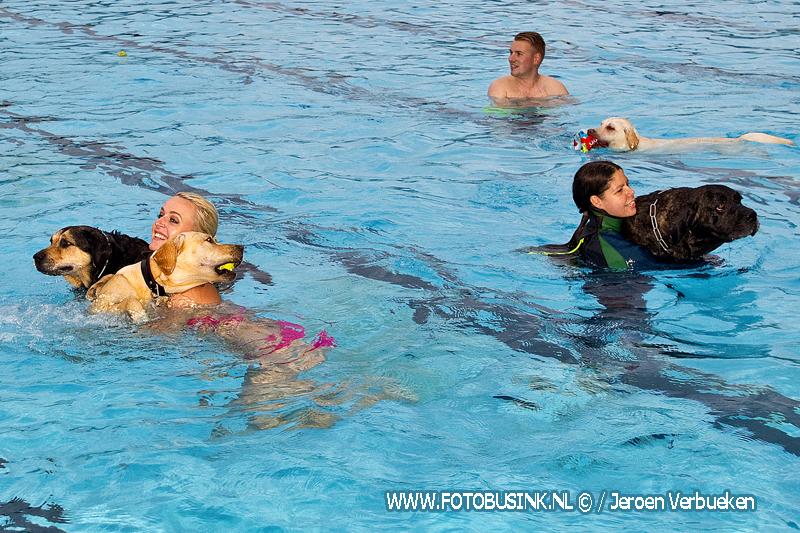 Hondenzwemmen in zwembad de Lockhorst in Sliedrecht.