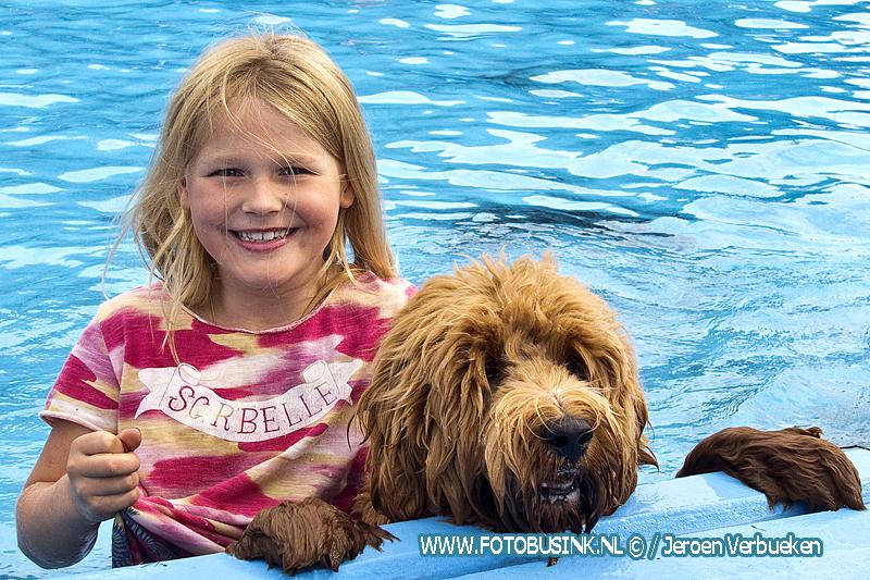 Hondenzwemmen in het Wantijbad in Dordrecht weer een groot succes.