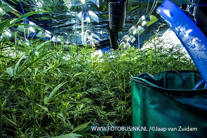Wietplantage ontdekt in pand aan de Merwedestraat in Dordrecht