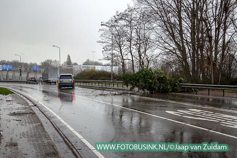 Omgewaaide boom op Brugweg