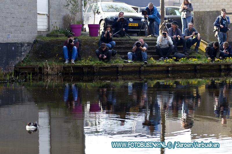 Zeldzame Papegaaiduiker in Dordtse sloot gespot.