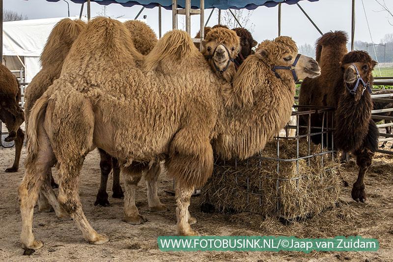 Circus Maximum in Dordrecht neergestreken