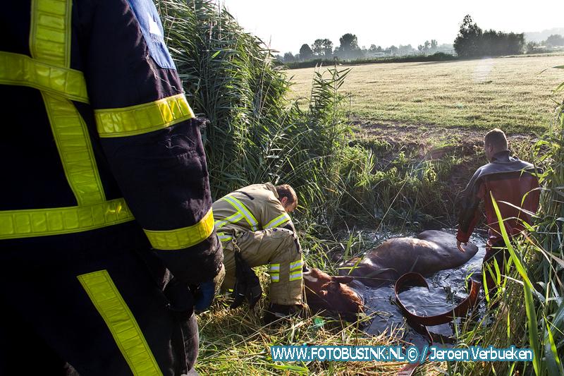 10 personen redden paard uit sloot op weiland achter Stevensweg in Dordrecht.