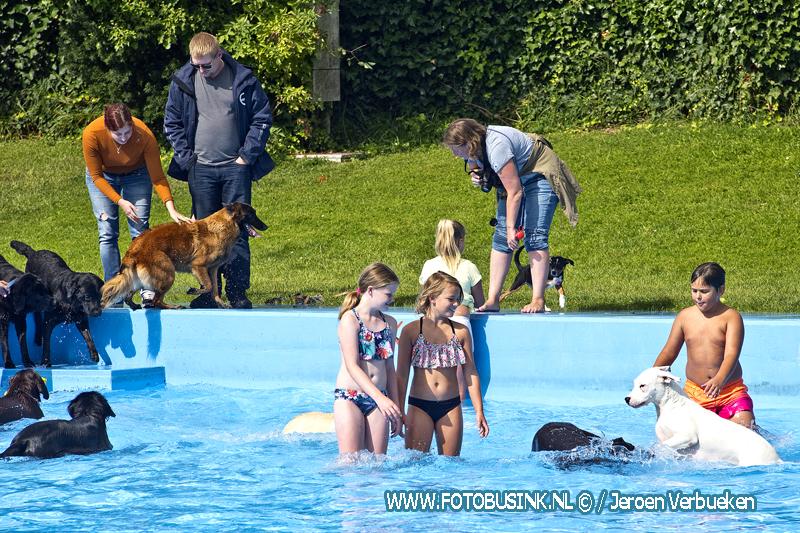 Hondenzwemmen in het Wantijbad ook dit jaar weer een groot succes.