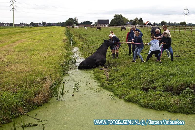 Paard te water aan de Parallelweg in Sliedrecht.