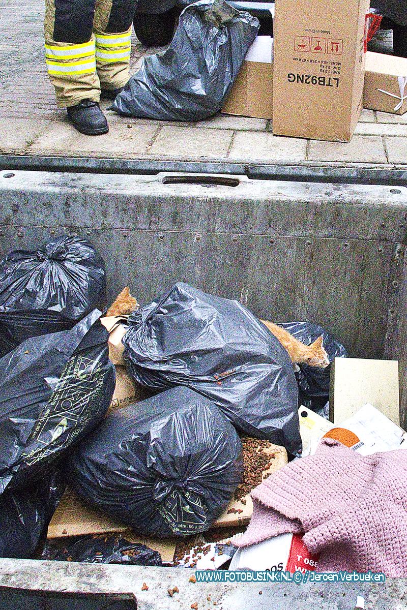 Twee gedumpte kittens in Ondergrondse container aangetroffen aan de De La Reystraat in Dordrecht.