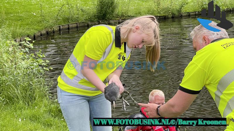 Brandweer opgeroepen voor een vogel in nood aan de Loudonstraat in Dordrecht